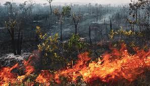 amamzônia chamas